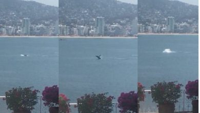 Photo of Ballena se pasea por la bahía de Acapulco