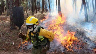 Photo of Se registran más de 5 mil incendios forestales en primeros 6 meses