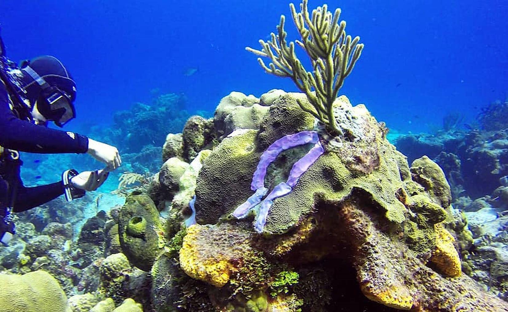 Photo of Detectan nueva amenaza para los corales en arrecifes de Cozumel