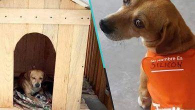 Photo of Perrito callejero encontró casa y empleo; Se llama silicon y ya tiene hasta uniforme