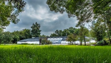 Photo of Pabellón contemporáneo, en el orquidario del Jardín Botánico