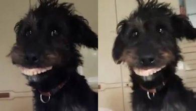 Photo of Perro roba la dentadura postiza de su dueña y se vuelve viral