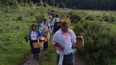 Photo of Comienza la recolección de hongos en Tepoztlán, Morelos