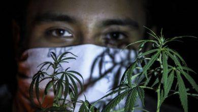 Photo of Habrá reforma legal para uso medicinal de la marihuana: AMLO
