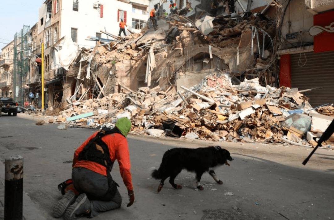 Photo of Perro rescatista detecta señales de vida entre los escombros de Beirut