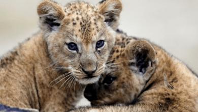 Photo of El mundo perdió casi 70% de la fauna salvaje desde 1970, según WWF