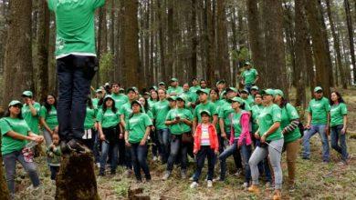 Photo of Alemania dona árboles a CDMX para revegetar el Desierto de los Leones